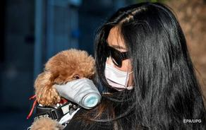 Dog infected with coronavirus placed in quarantine in Hong Kong