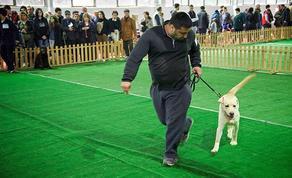 В Хелвачаури проходит выставка собак