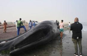 ნამიბიის სანაპიროზე ლურჯი ვეშაპი გამოირიყა