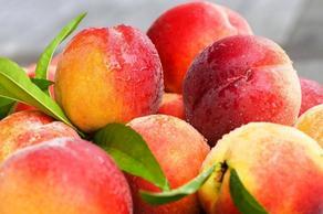 В этом году Грузия экспортировала 1 800 тонн персиков