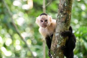 5 обезьян сбежали от частного коллекционера - ВИДЕО
