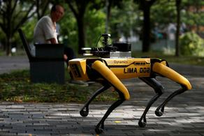 Robotic dog regulates social distance in the US - VIDEO