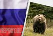 რუსეთში დათვმა მოზარდი შეჭამა