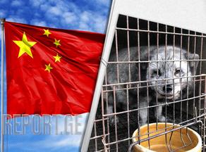 Животноводческие фермы и угроза новых вирусов из Китая