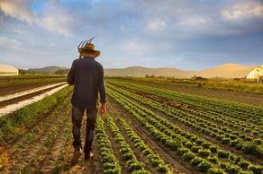 ფერმერებზე დახმარების გაცემა იწყება