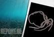 ოკეანის სიღრმეში შემზარავი არსება აღმოაჩინეს