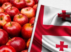 ვაშლის წარმოების ტემპი მატულობს