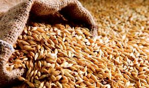 Russia to cease wheat export