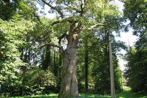 30% видов деревьев находятся на грани исчезновения
