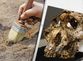 Archaeologists discover 2-million-year-old skull
