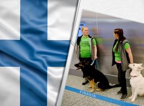 В Хельсинки собак научили выявлять COVID-19