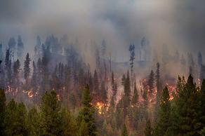 Пожар в Сванети - горит нижний покров леса