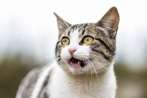 კატების სერიულ მკვლელს 5 წლით თავისუფლების აღკვეთა მიუსაჯეს