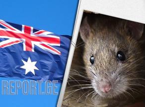 ავსტრალიაში თაგვების შემოსევის გამო ერთ-ერთი ციხე დაკეტეს
