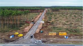 Близ Берлина вырубили 92 гектара леса