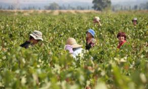 ფერმერი ქალების როლი იზრდება