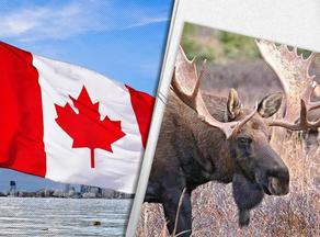 Канадцы просят лосей не облизывать машины - ВИДЕО