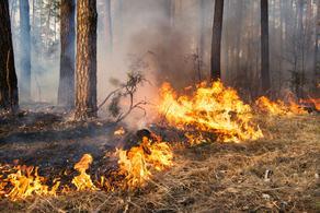 В лесу Ахалцихе возник пожар
