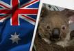 სამი წლის მანძილზე ავსტრალიამ კოალების მესამედი დაკარგა