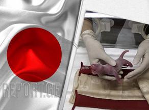 ტოკიოს ზოოპარკში გიგანტური პანდები დაიბადნენ - VIDEO