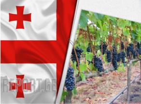 წელს ღვინის ყურძნის ფასი ორჯერ მეტი იქნება, ვიდრე სასპირტე ყურძნის
