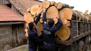 ხე-ტყის უკანონო მოპოვების 3573 ფაქტი გამოავლინეს