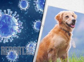 აღმოჩენილია კორონავირუსის ახალი ტიპი, რომელიც ძაღლისგან ვრცელდება