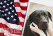 В США запрещён ввоз собак из 113 стран