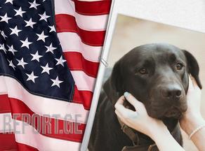 აშშ-ში 113 ქვეყნიდან ძაღლების შეყვანა იკრძალება