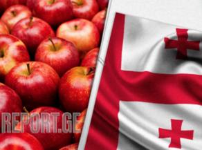 არასტანდარტული ვაშლის რეალიზაციის ხელშეწყობისთვის ახელმწიფო პროგრამა ამოქმედდება