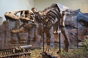 67-million-year-old tyrannosaurus skeleton sold for 31.8 million