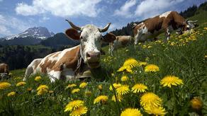 შვეიცარიაში, პესტიციდების ასაკრძალად, რეფერენდუმი ტარდება
