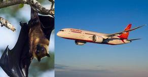 ინდოეთში თვითმფრინავის ბორტზე ღამურა შეიპარა - VIDEO