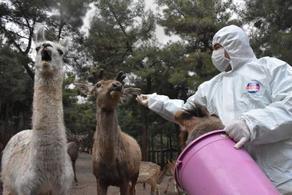 თურქეთში ზოოპარკის ცხოველებს სპეცაღჭურვით კვებავენ - PHOTO