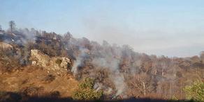 Лесной пожар в Цхалтубо локализован