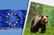 ევროკავშირი რუმინეთს დათვების დათვლისთვის 11 მილიონ ევროს გამოუყოფს