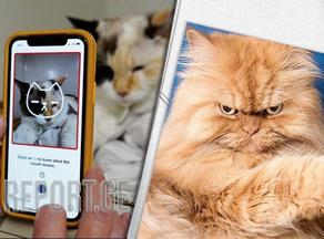 აპლიკაციის საშუალებით შეძლებთ გაიგოთ, როგორ ხასიათზეა თქვენი კატა