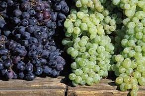 რა უნდა ღირდეს ყურძენი წელს - ოპოზიციის მოთხოვნა