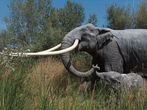 Skeleton of a 300,000-year-old elephant unearthed in Germany  - PHOTO