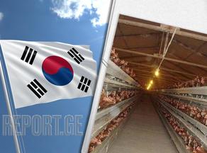სამხრეთ კორეაში, ფრინველის გრიპის გამო, ფერმების მუშაობა შეიზღუდა