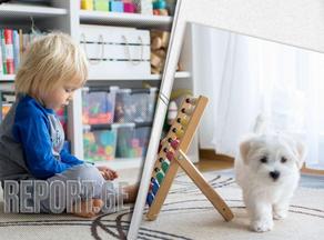 ძაღლებს მარტივი არითმეტიკა ბავშვების მსგავსად ესმით