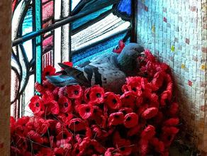 Голубь воровал искусственные цветы с мемориала и строил из них гнездо