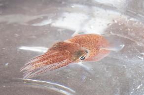 NASA-მ კოსმოსში ათობით კალმარი გაგზავნა