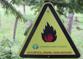 ტყეში გაჩენილი ხანძრის შედეგები სავალალოა- გარემოს დაცვის სამინისტროს განცხადება