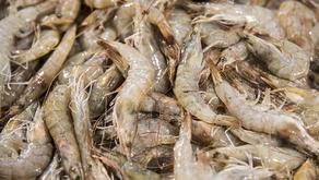 В Китае COVID-19 обнаружен на упаковках эквадорских креветок