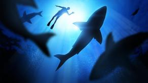Australian naval police officer was eaten by a shark