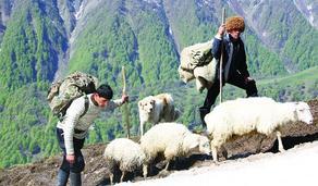 Georgia terminates live sheep exports to Azerbaijan