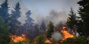 В Гурии горит лес