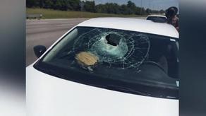 Turtle crashes car window in Florida