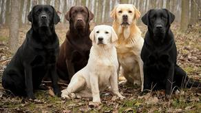 New formula for calculating the 'true age' of your canine found